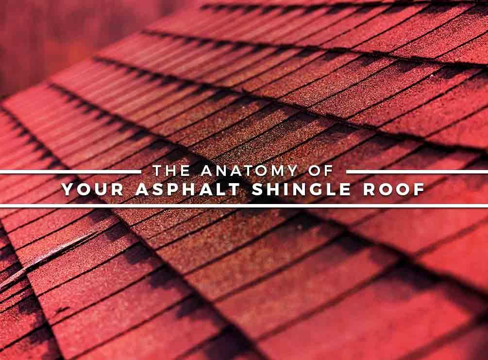The Anatomy Of Your Asphalt Shingle Roof